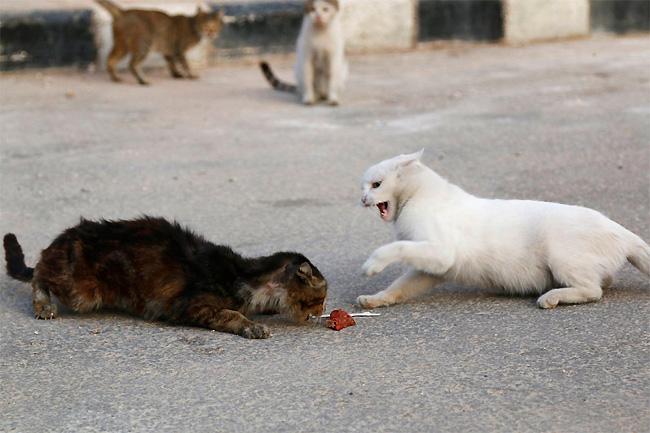 uomo-siria-sfama-gatti-abbandonati-6