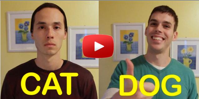 video-divertente.differenza-cane-gatto