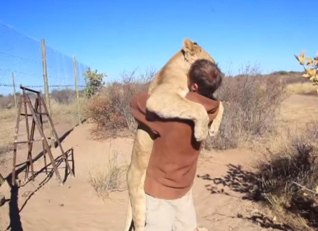 video-leonessa-abbandonata-abbraccio-1