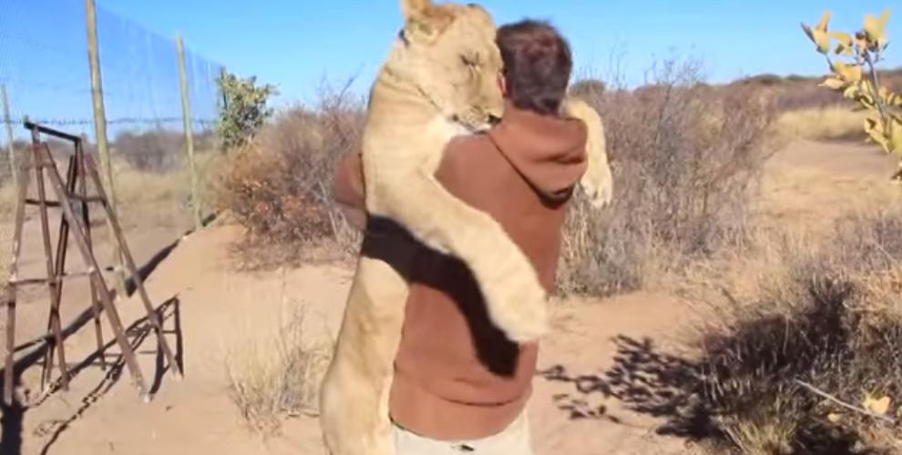 video-leonessa-abbandonata-abbraccio-3