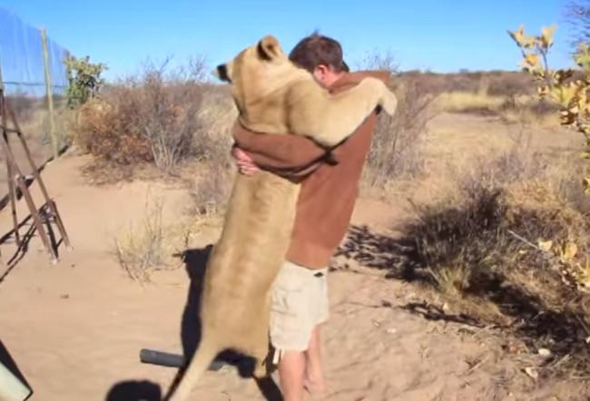 video-leonessa-abbandonata-abbraccio-4