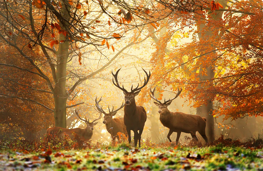 animali-autunno-06
