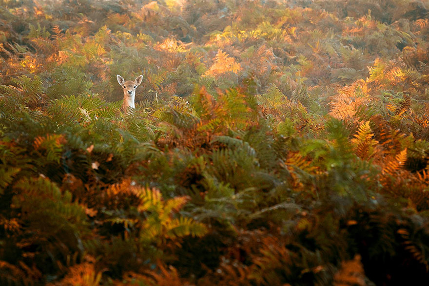 animali-autunno-08