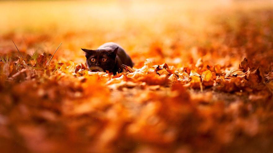 animali-autunno-09