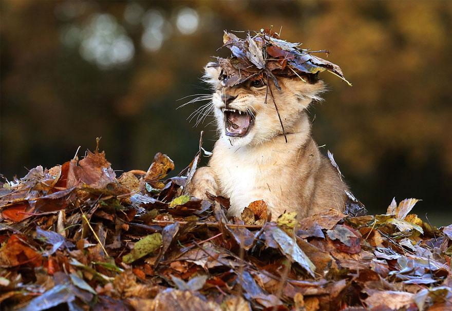 animali-autunno-13