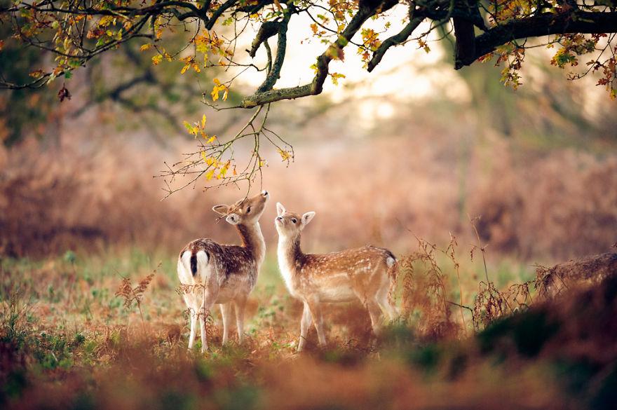 animali-autunno-15