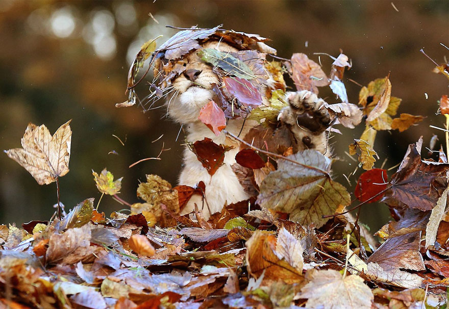 animali-autunno-16