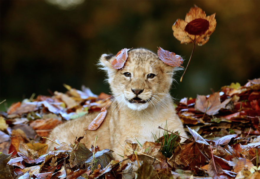 animali-autunno-17