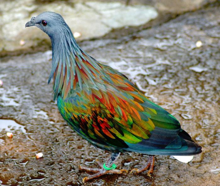 animali-colori-inusuali-rari-03