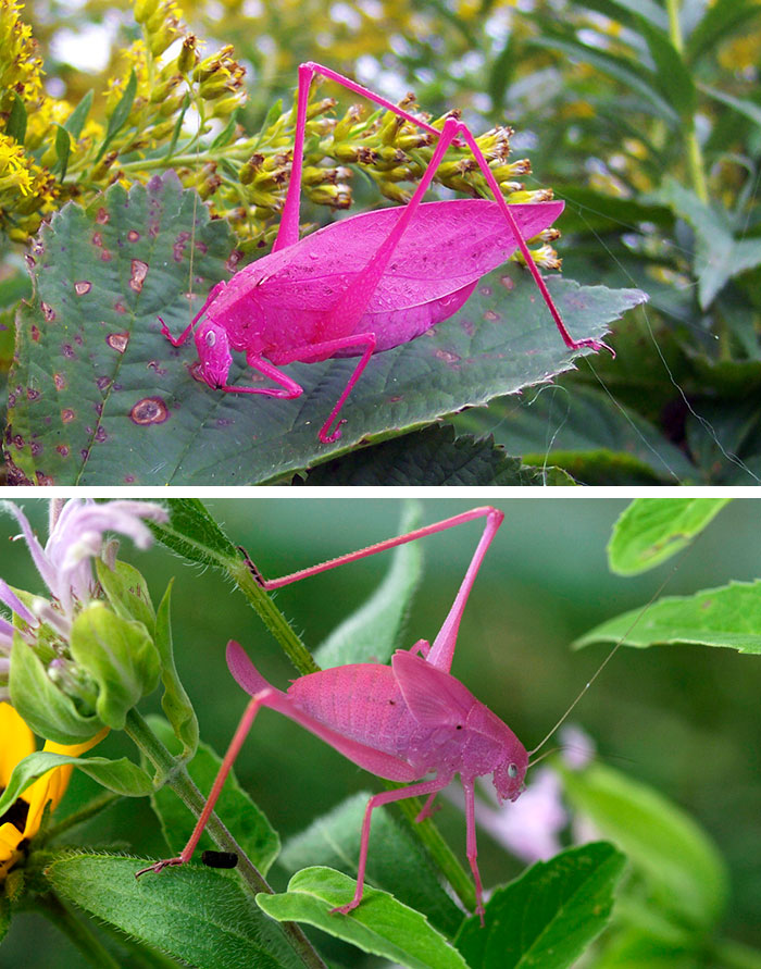 animali-colori-inusuali-rari-13
