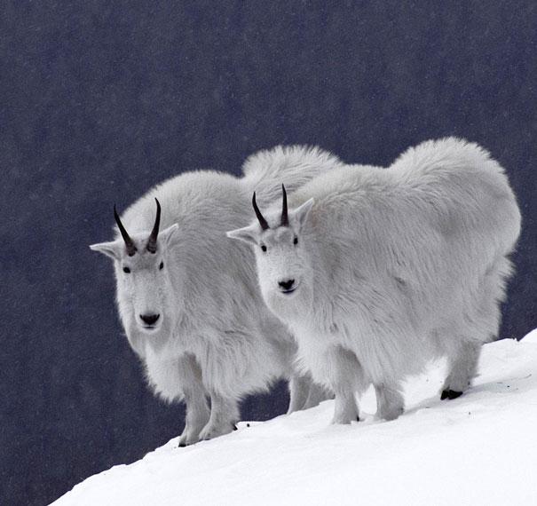 animali-gemelli-identici-carini-cuccioli-01