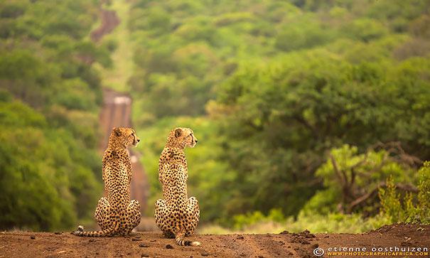 animali-gemelli-identici-carini-cuccioli-02