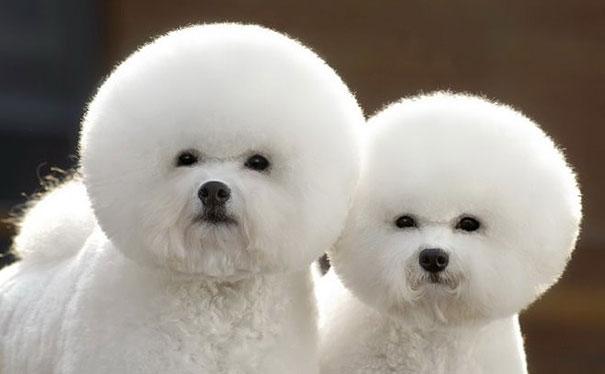 animali-gemelli-identici-carini-cuccioli-09