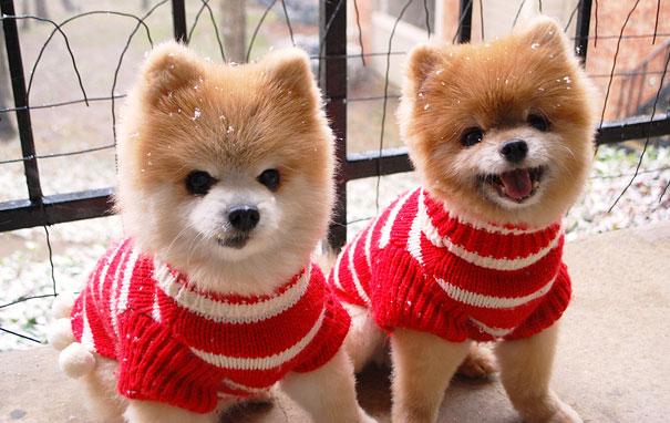 animali-gemelli-identici-carini-cuccioli-11