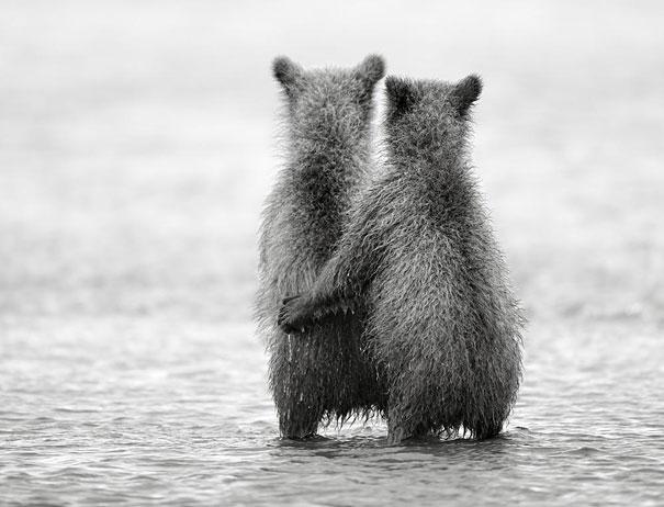 animali-gemelli-identici-carini-cuccioli-13