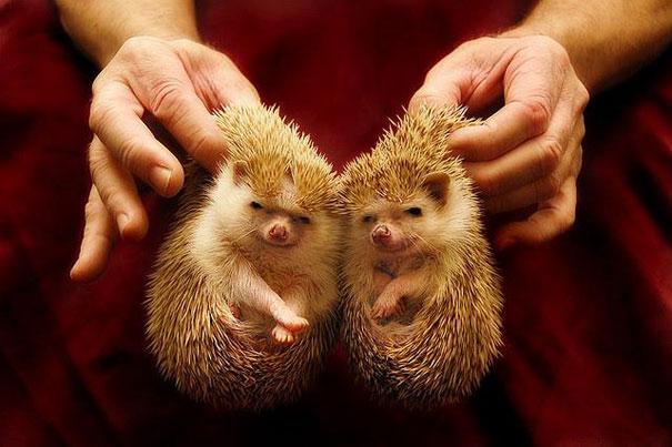 animali-gemelli-identici-carini-cuccioli-15