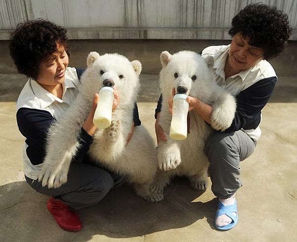 animali-gemelli-identici-carini-cuccioli-16