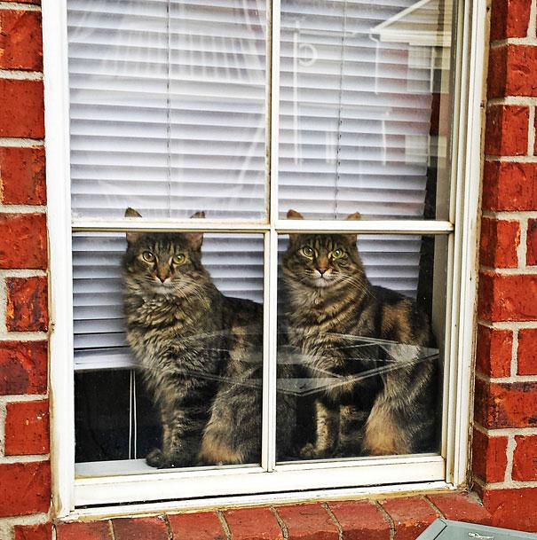 animali-gemelli-identici-carini-cuccioli-17
