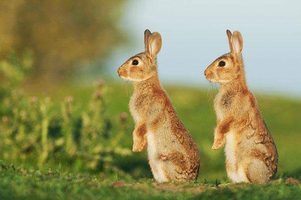animali-gemelli-identici-carini-cuccioli-20