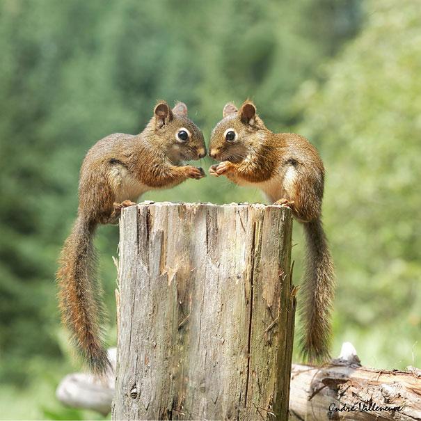 animali-gemelli-identici-carini-cuccioli-21
