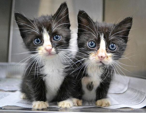 animali-gemelli-identici-carini-cuccioli-24