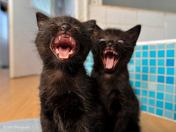 animali-gemelli-identici-carini-cuccioli-25