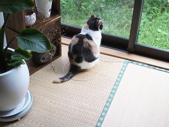 come-intrappolare-un-gatto-cerchio-02