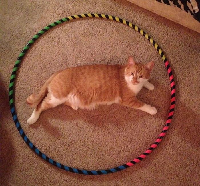 come-intrappolare-un-gatto-cerchio-03