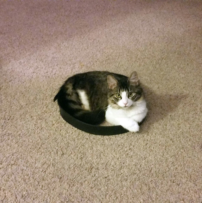 come-intrappolare-un-gatto-cerchio-04