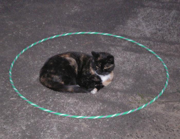 come-intrappolare-un-gatto-cerchio-05