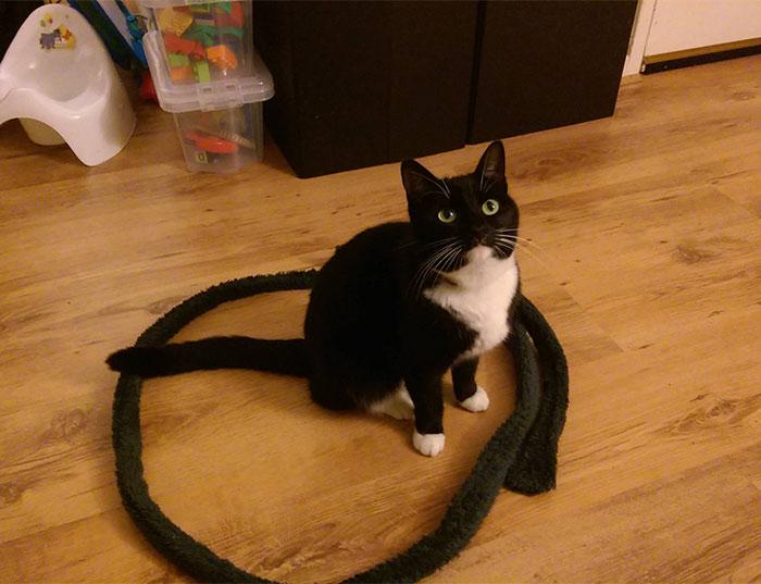 come-intrappolare-un-gatto-cerchio-06