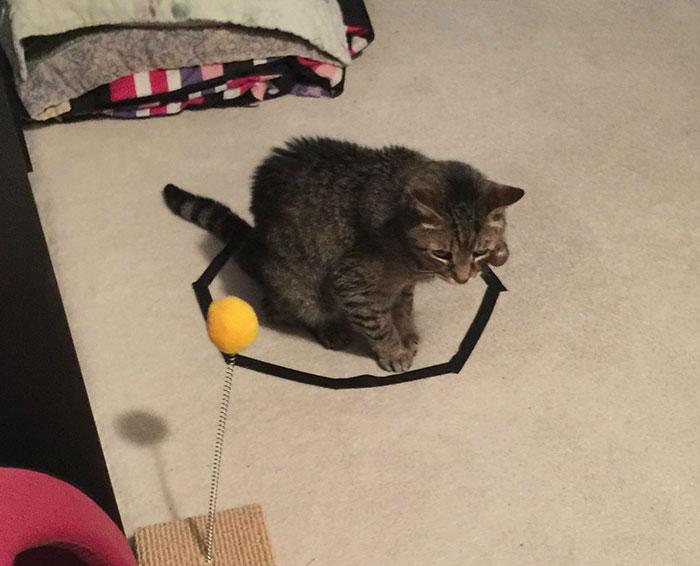 come-intrappolare-un-gatto-cerchio-07