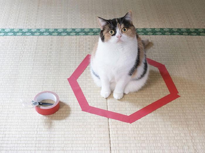 come-intrappolare-un-gatto-cerchio-08