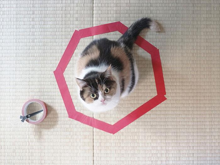 come-intrappolare-un-gatto-cerchio-09