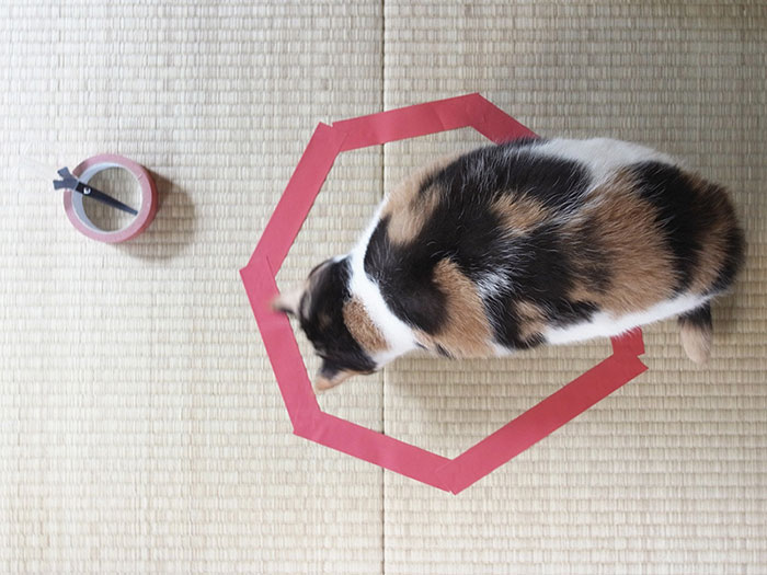 come-intrappolare-un-gatto-cerchio-10