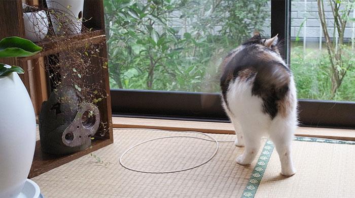 come-intrappolare-un-gatto-cerchio-12
