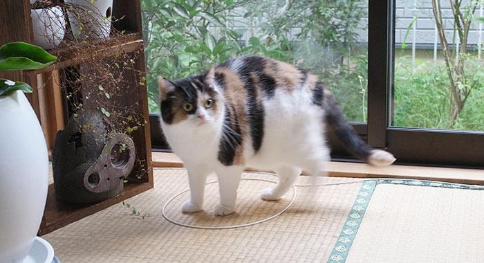 come-intrappolare-un-gatto-cerchio-13