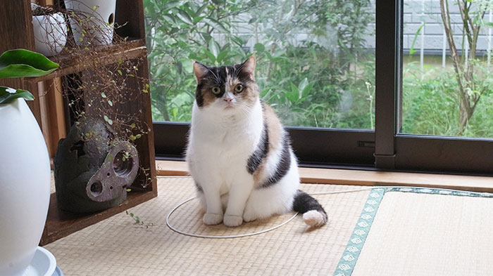 come-intrappolare-un-gatto-cerchio-14