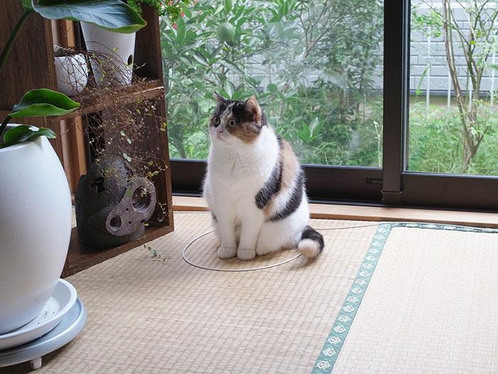 come-intrappolare-un-gatto-cerchio-15