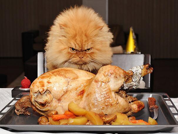 Foto divertenti di gatti che rubano cibo