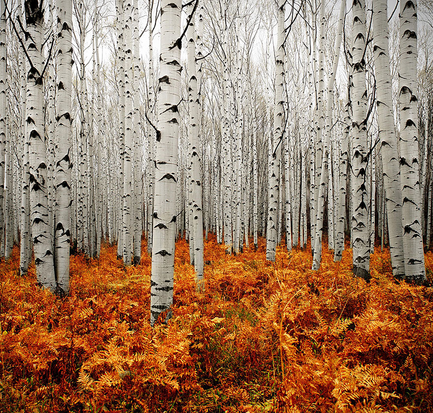 fotografia-autunno-05