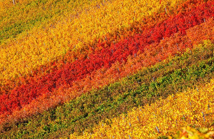 fotografia-autunno-06