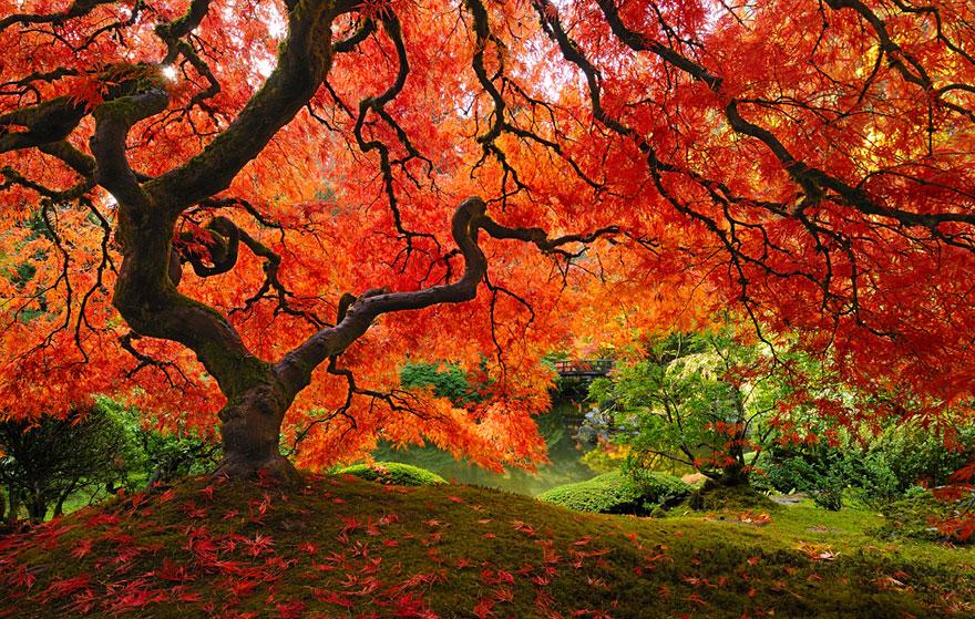 fotografia-autunno-07