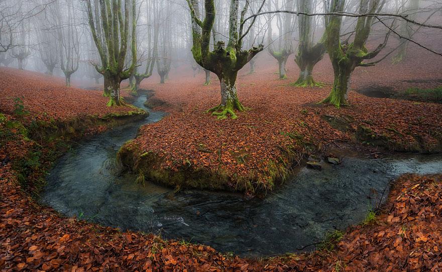 fotografia-autunno-16