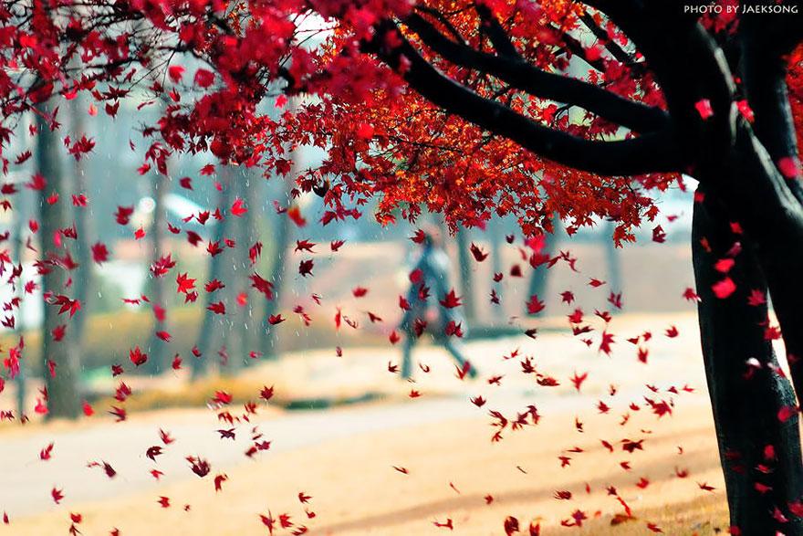 fotografia-autunno-17