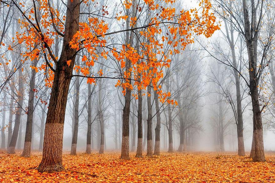 fotografia-autunno-19