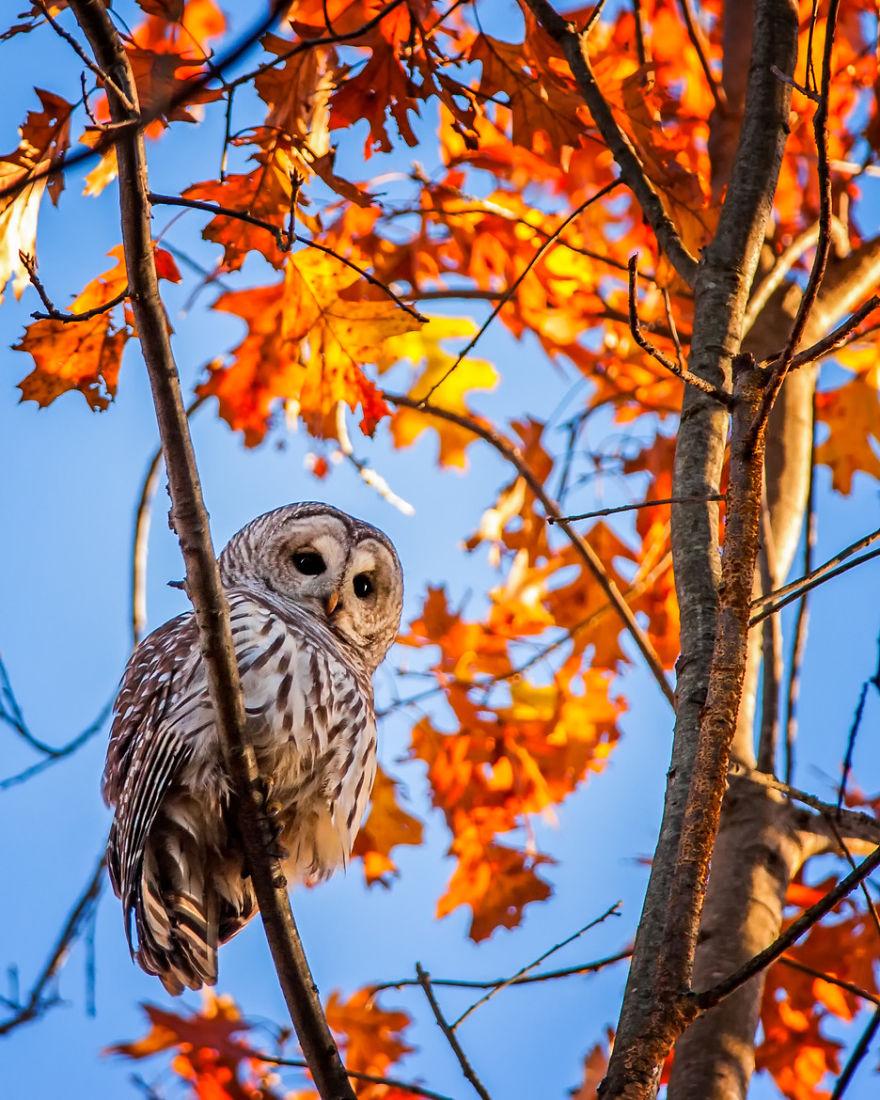 fotografia-autunno-20