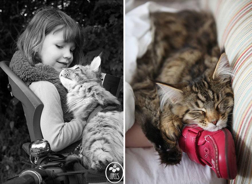 gatto-terapia-autismo-bambina-iris-grace-11