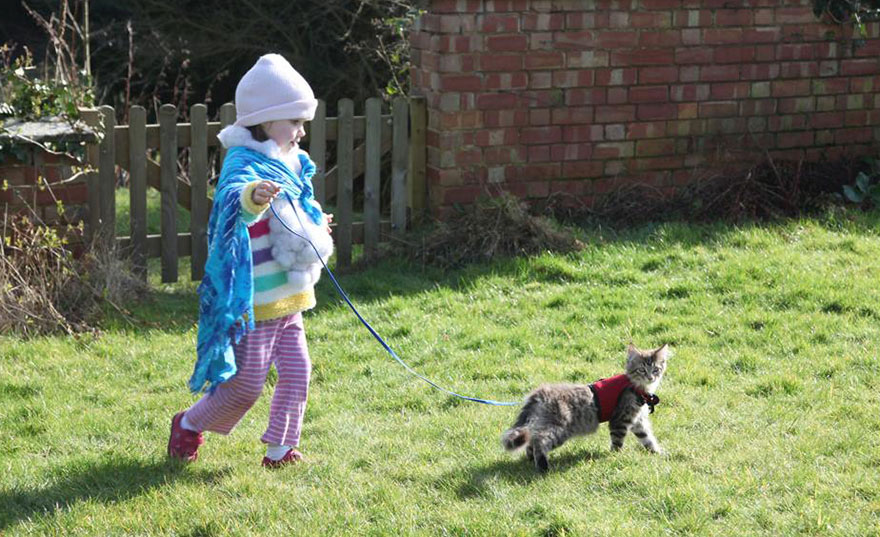 gatto-terapia-autismo-bambina-iris-grace-17