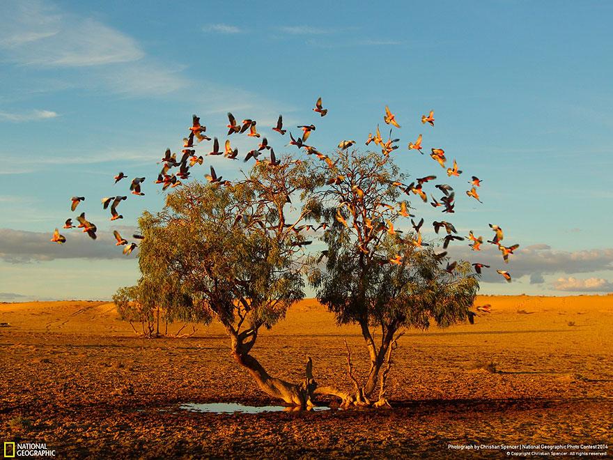 national-geographic-photo-contest-2014-foto-natura-concorso-06